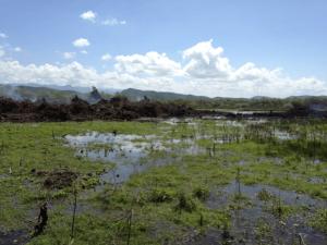Humedal en el área Guánica
